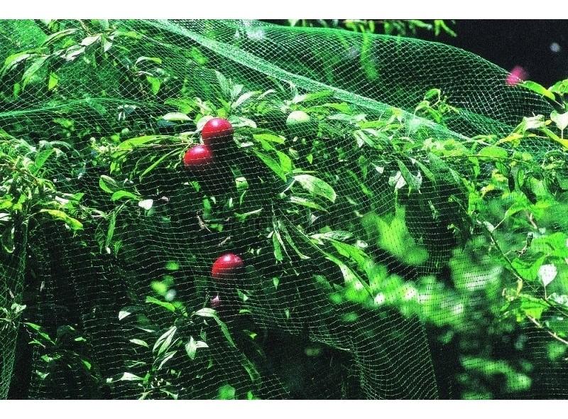 Сетка защитная от птиц, зеленая, 4м х 50м, Венгрия